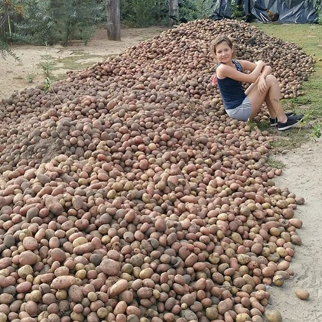 Дню, прикол про картошку картинки