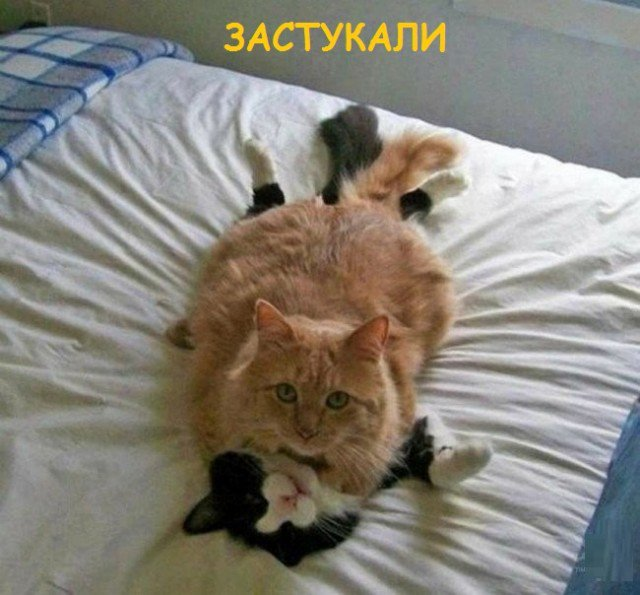 Такие разные котики (37 фото)