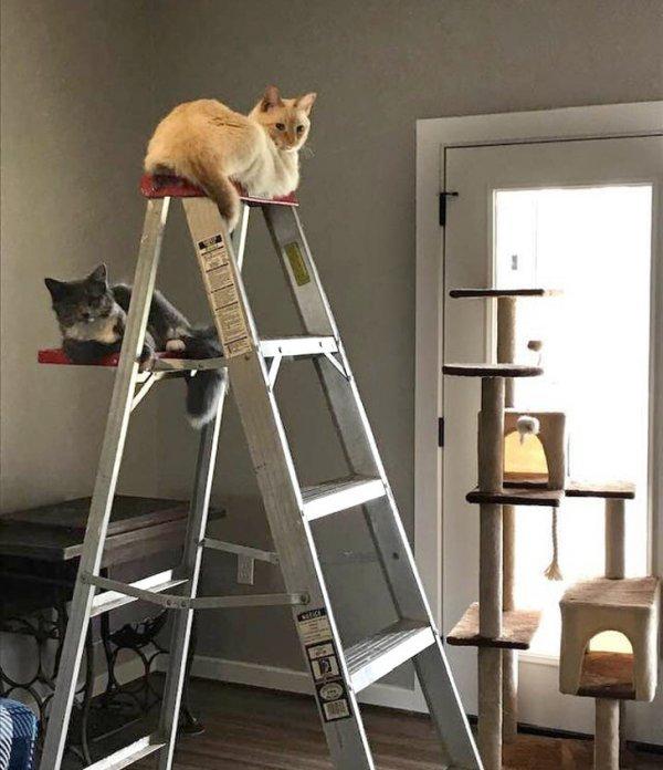 Коты-проказники (20 фото)