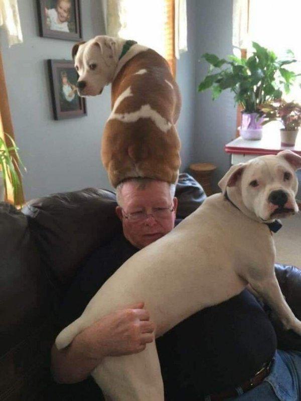 Смешные фотографии собак (15 фото)