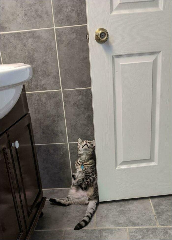 Смешные котики