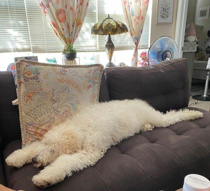 Собаки, спящие в странных позах