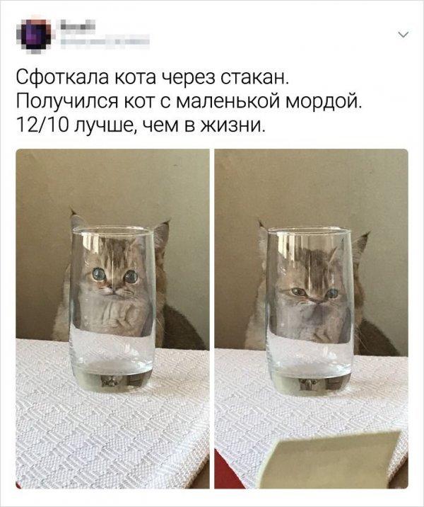 Забавные сообщения про котов