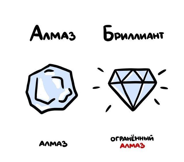 Различия похожих вещей и понятий