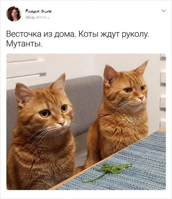 Сообщения от владельцев кошек