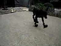 Собачья