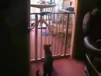 Кошачий