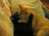 Кошачья