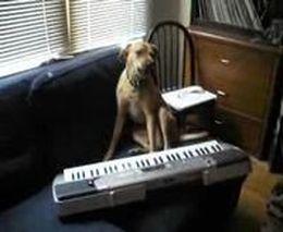 Музыкальный
