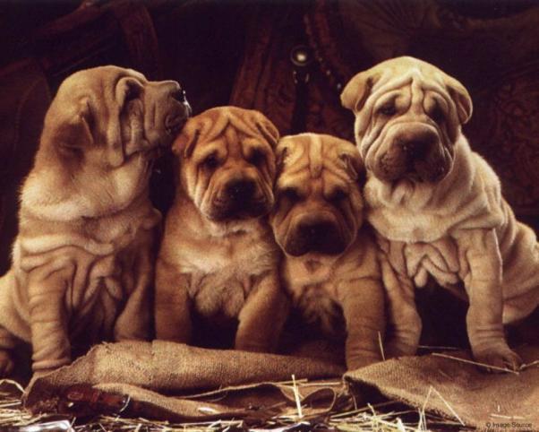'Собачки!