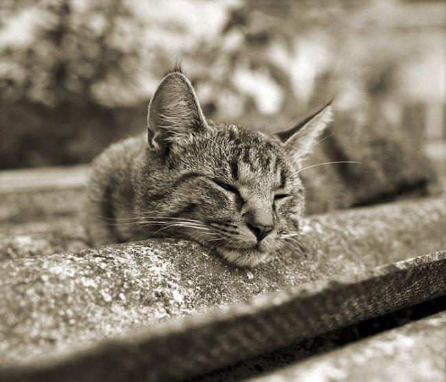 'Котятки
