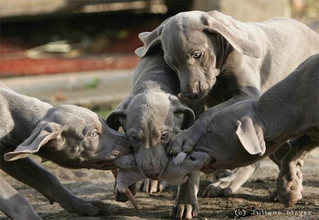 'Собачки