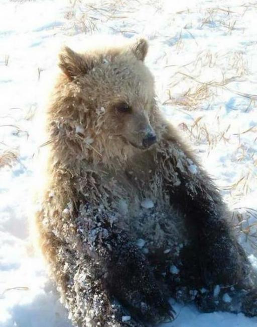'Медведи