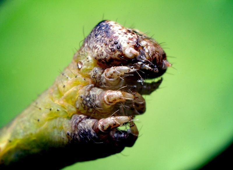 протяжении всей фото жука вызывающее тошноту вообще