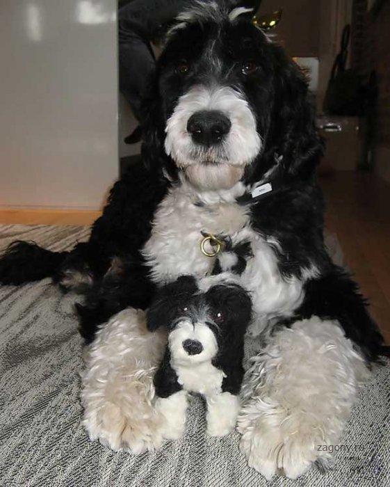 Собаки и их маленькие копии (16 фото)