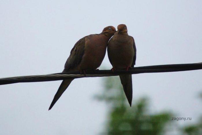 Любовь (4 фото)