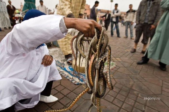 Заклинатели змей (8 фото)