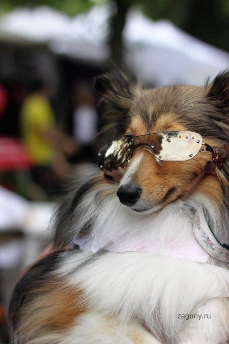 Собачий фестиваль Woofstock (14 фото)