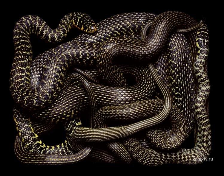 Дочкой поздравление, змеиный клубок гифка