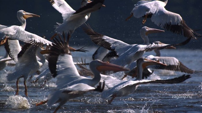 Миграция животных (18 фото)
