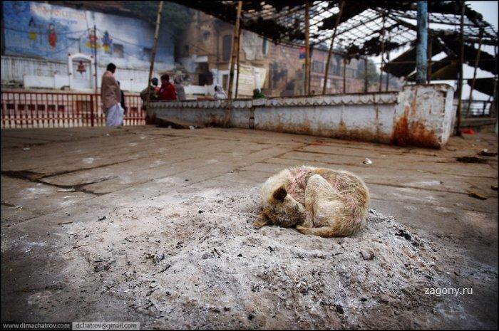 Холода на Ганге (8 фото)