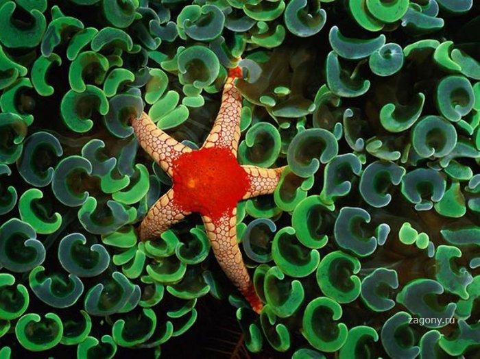 Подводный мир (17 фото)