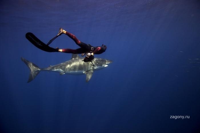 Дружелюбные акулы (9 фото)