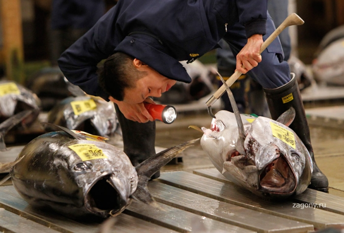 Рыбный рынок в Японии (9 фото)