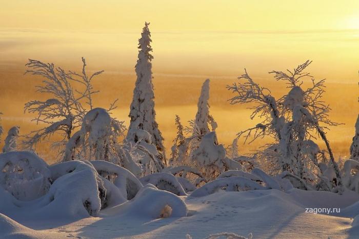 Снимки «Замерзшая планета» от канала Discovery (30 фото)