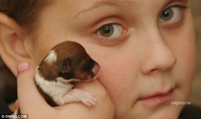 Микро-щенок по кличке Чудо (7 фото)