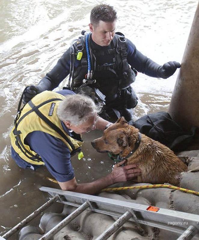 спасатели животных фото авторские права фотографов