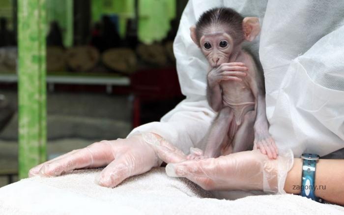 Животные в фотографиях прошлой недели (26 фото)