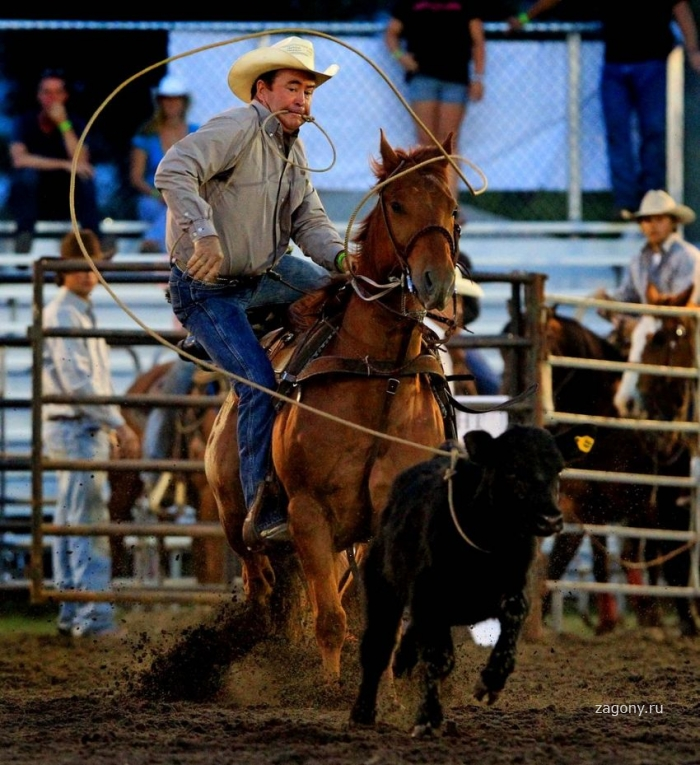 Родео «South Florida Rodeo» (29 фото)