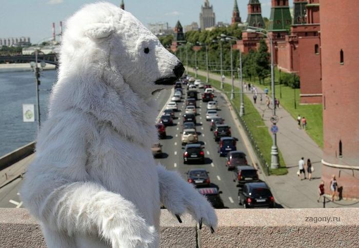 Медведь на гастролях (16 фото)