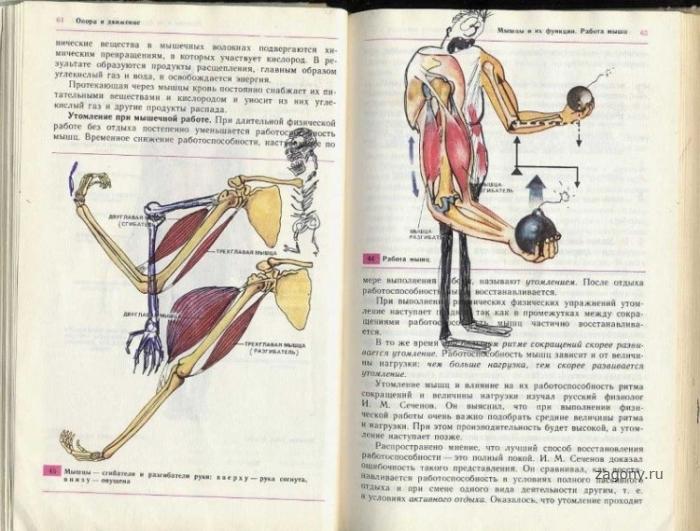 Рисунки в школьных учебниках (39 фото)