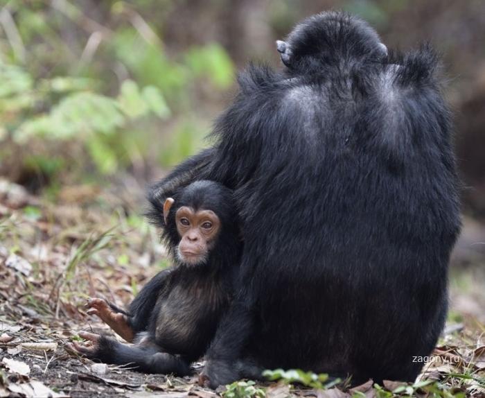 Уникальные кадры фотографа-натуралиста (5 фото)