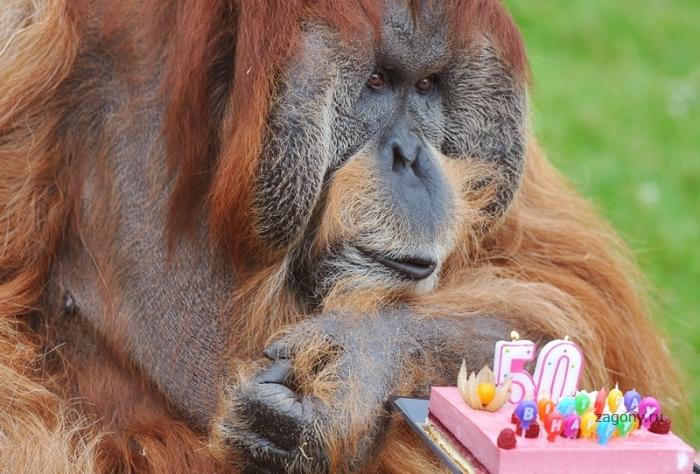 С днем рождения , Майор! (4 фото)