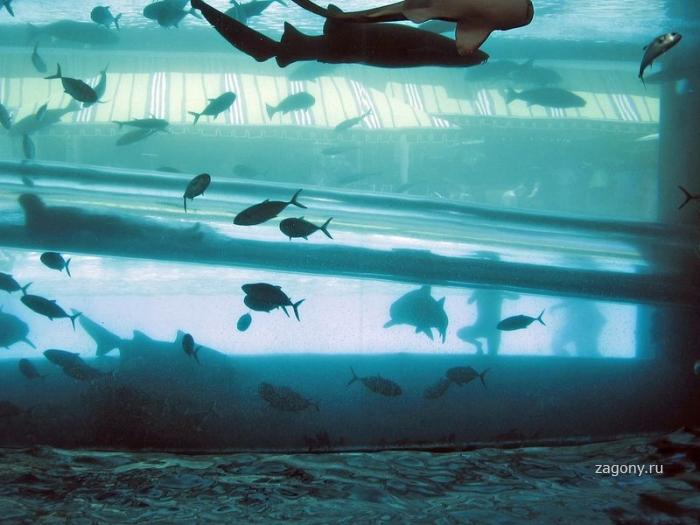 Водные горки в бассейне с акулами (15 фото)