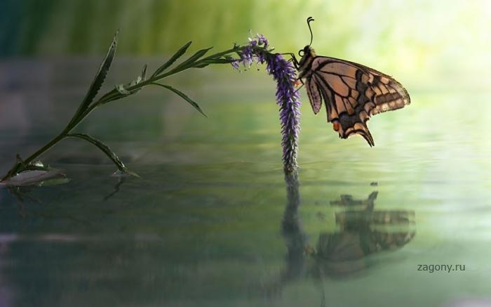 Макрофотографии улиток и насекомых под дождем (12 фото)