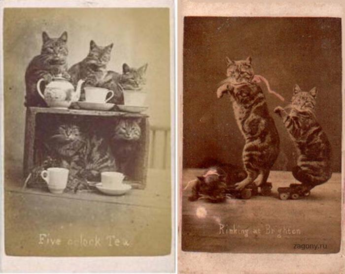 Интересные старые фотографии (19 фото)