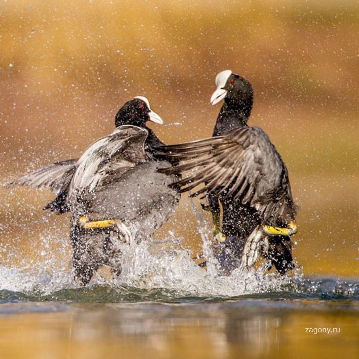 Победители конкурса The British Wildlife Photography Awards 2012 (27 фото)