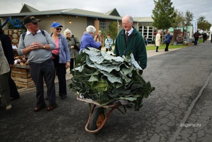 Фестиваль урожая в Англии Фермерские шедевры (13 фото)