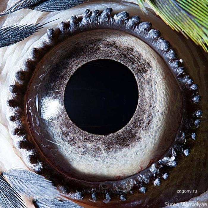 Такие удивительные глаза животных (25 фото)