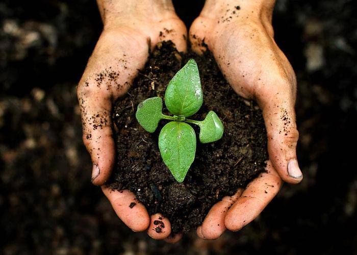 Интересные факты о почках растений. Интересные факты о растениях || Интересные факты о побегах и почках растений
