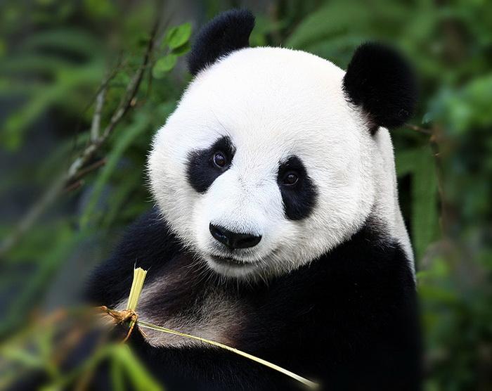 красивые картинки картинки животных займ на карту без процентов рф