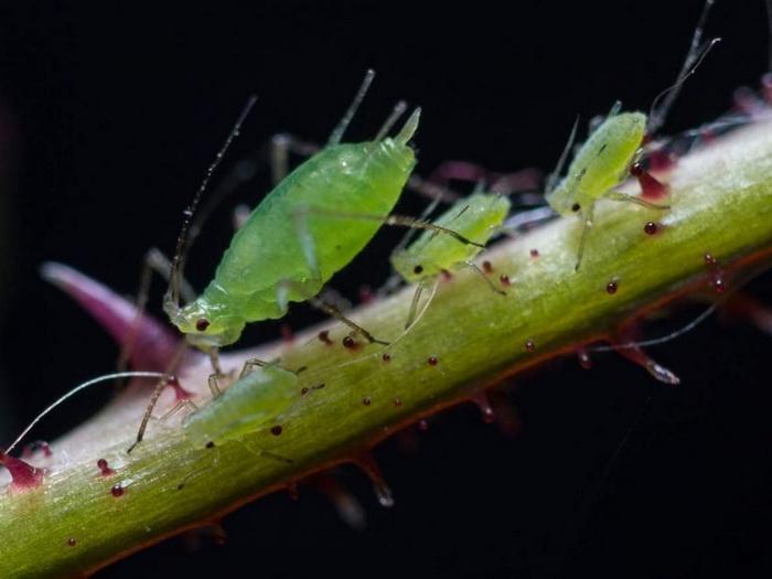 Самые необычные примеры симбиоза между животными и бактериями
