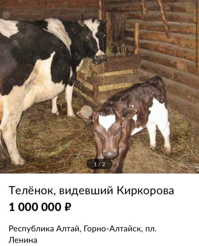 Теленок за миллион рублей